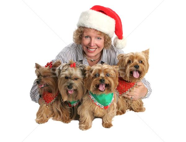 Christmas Yorkie Family Portrait Stock photo © lisafx