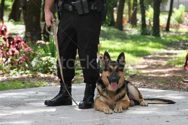 Police Dog 2 Stock photo © lisafx