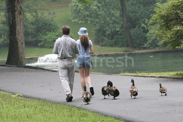 Trailing Duckies Stock photo © lisafx