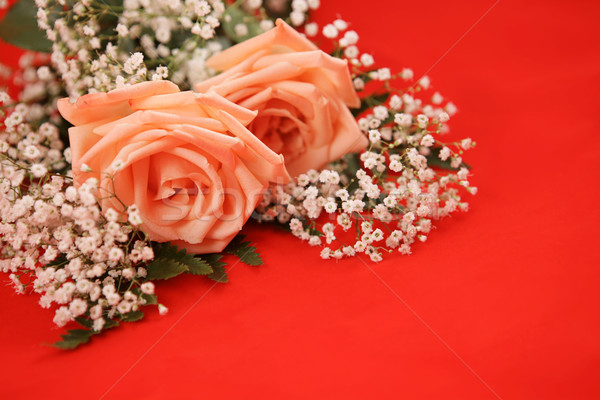 Valentin rose bouquet rose roses souffle Photo stock © lisafx