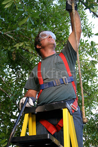 Tree Trimmer Safety Harness Stock photo © lisafx