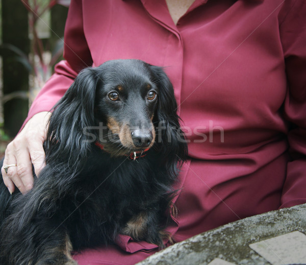 Pet Therapy Stock photo © lisafx