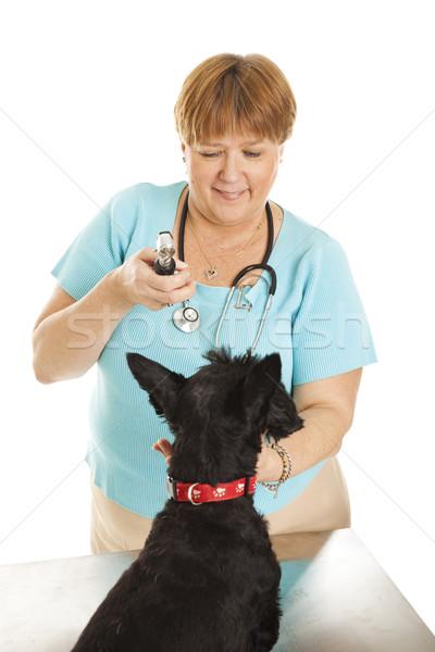 Female Veterinarian Stock photo © lisafx