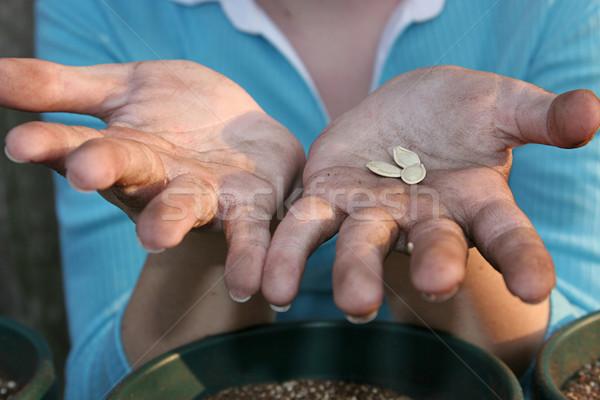 Gardeners Hands Stock photo © lisafx