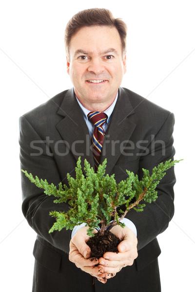 бизнесмен бонсай дерево бизнеса Сток-фото © lisafx