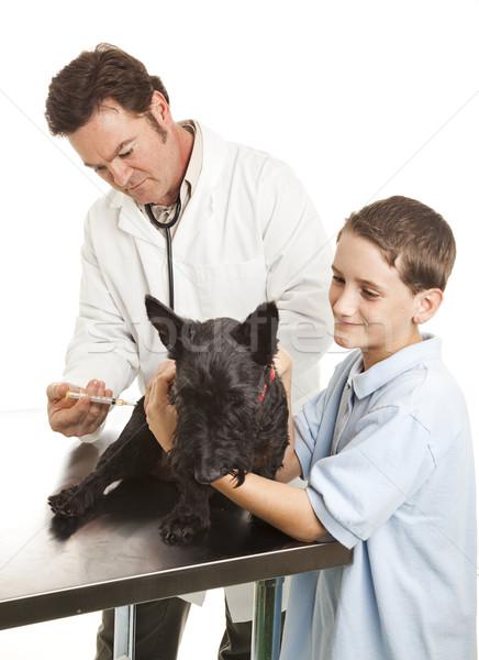 Veterinario vacunación perro enfoque cara aislado Foto stock © lisafx