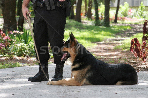 Police Dog 1 Stock photo © lisafx