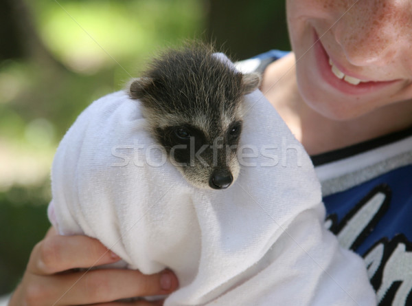 Rescued Raccoon Baby Stock photo © lisafx