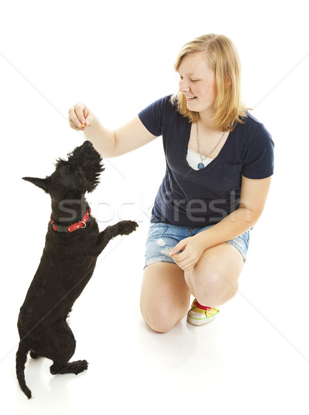 Girl and Dog Do Tricks Stock photo © lisafx