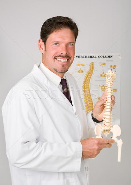 Przystojny kręgarz plastikowe kręgosłup medycznych Zdjęcia stock © lisafx