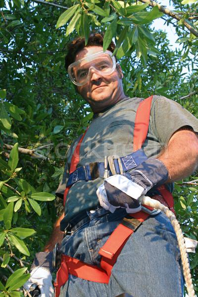 Işçi güvenlik dişli ağaç adam Stok fotoğraf © lisafx