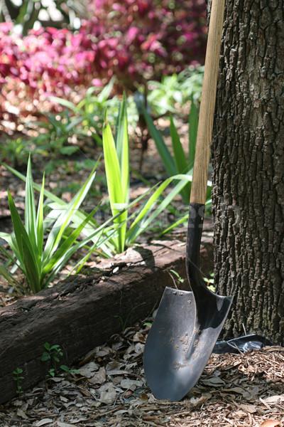 Shovel In Garden Stock photo © lisafx