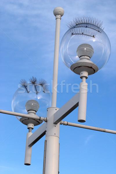 Seagull-proof Street Lamp Stock photo © lisafx