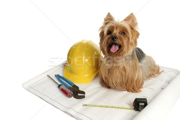 Construction Dog Stock photo © lisafx