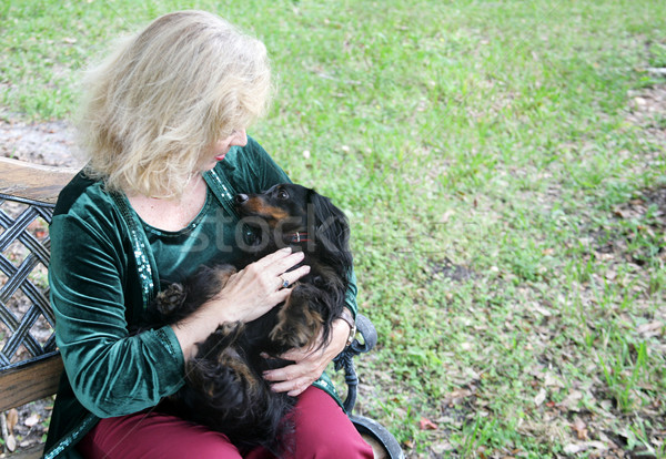Cuddly Dachshund in the Park Stock photo © lisafx