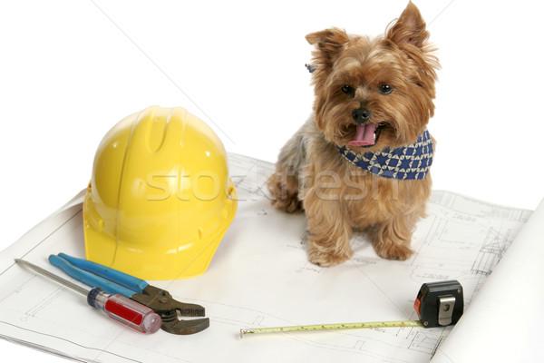 Canine Architect Stock photo © lisafx