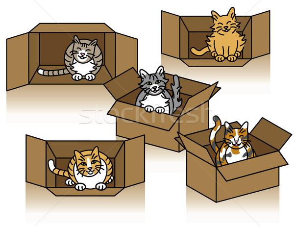 Foto Stock Cute Gatos Jugando Cajas Cuadro Funny