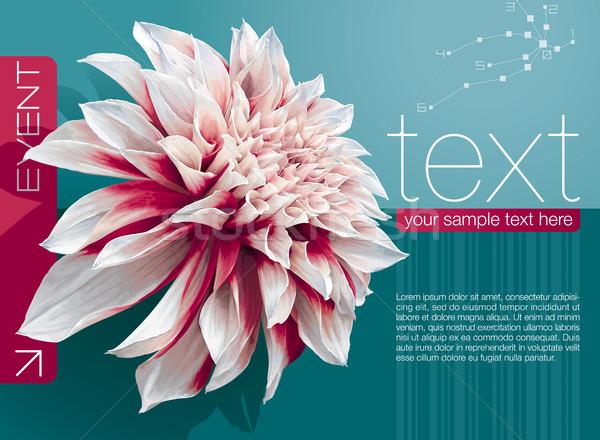 Dahlia vector abstract boekje dekken bloem Stockfoto © LisaShu