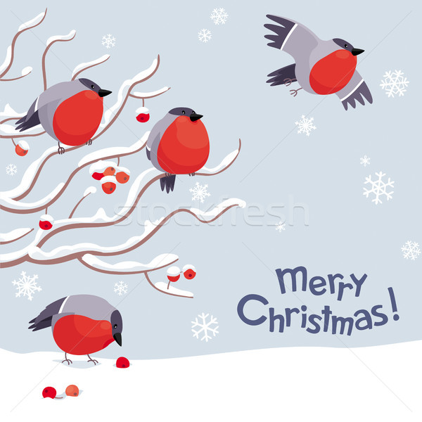 Vector bullfinches and rowan Christmas image Stock photo © LisaShu