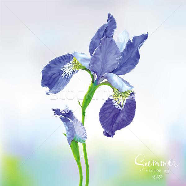 Blauw iris vector bloem kiem wazig Stockfoto © LisaShu