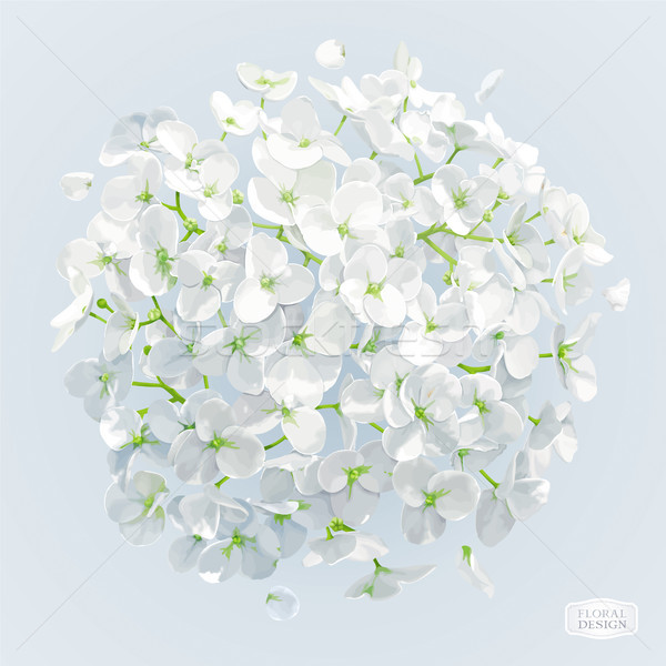 White Hydrangea flower vector drawing Stock photo © LisaShu