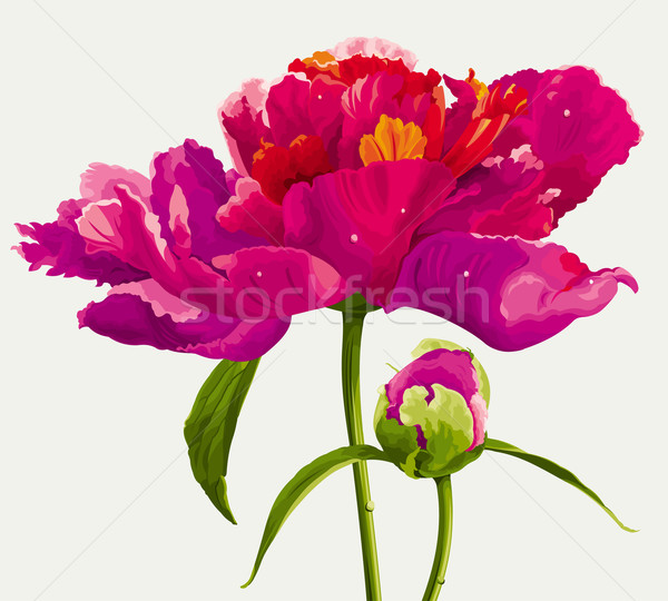 Red peony flower Stock photo © LisaShu