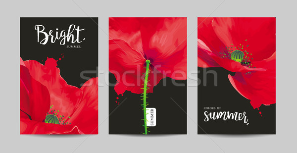 Stock photo: Luxurious bright red vector Poppy flowers paintings on black bac
