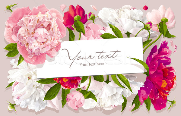 Pink, red and white peony greeting card Stock photo © LisaShu