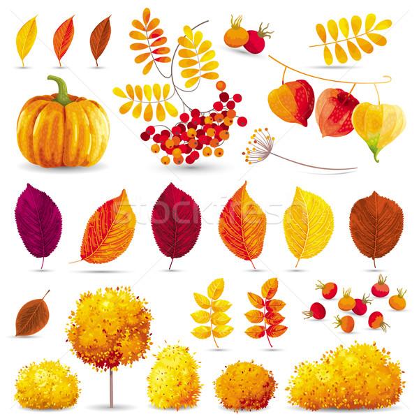 Autumn set Stock photo © LisaShu
