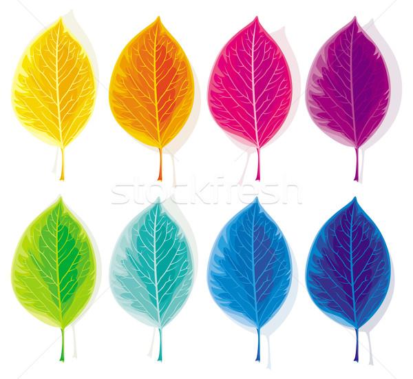 Ingesteld gekleurd bladeren acht geschilderd kleuren Stockfoto © LisaShu