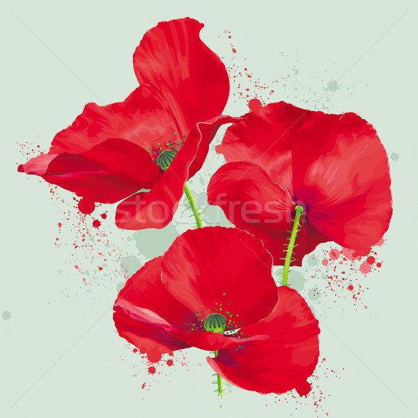 Stock photo: Luxurious bright red vector Poppy flowers drawing in watercolor