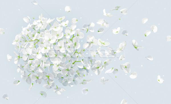 Stockfoto: Zomer · wind · vector · tekening · luxueus · witte