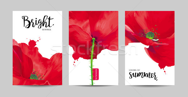 Stock photo: Luxurious bright red vector Poppy flowers paintings set on white