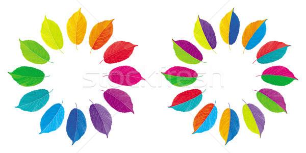 Stockfoto: Vector · kleur · wielen · ingesteld · twee · veelkleurig