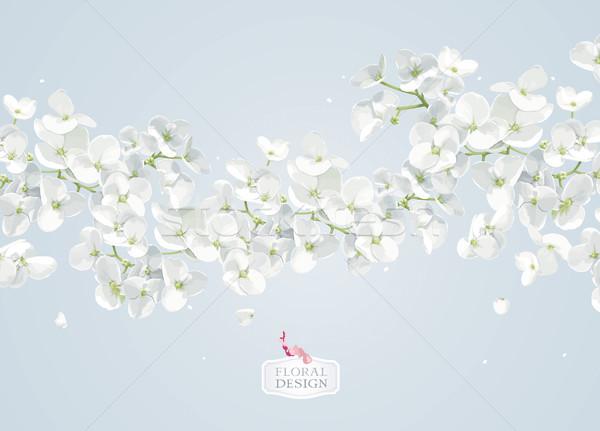 Appel bloesem vector moderne kunst Stockfoto © LisaShu