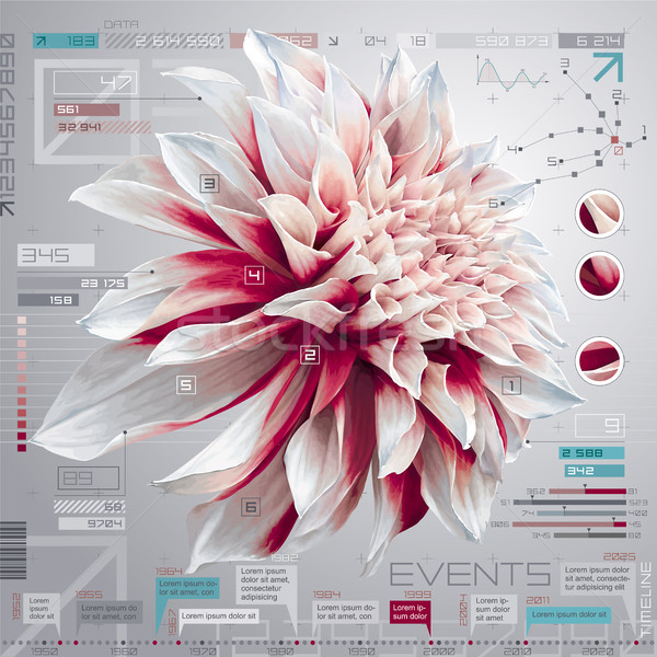Dahlia infographic set Stock photo © LisaShu