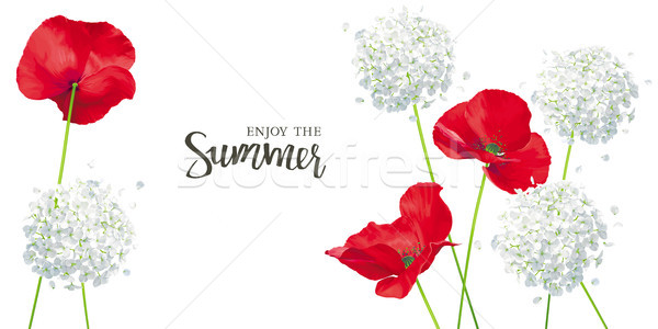 Luxurious bright red vector Poppy and Hydrangea flowers - painti Stock photo © LisaShu