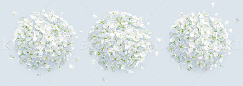 Tree vector white Hydrangeas background Stock photo © LisaShu