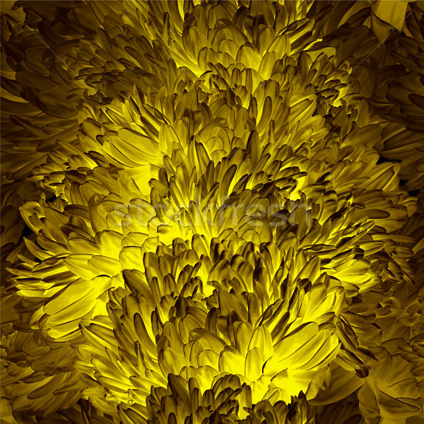 Gold  luminous Chrysanthemum flower  seamless vector background  Stock photo © LisaShu