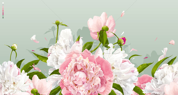 Pink and white peony background Stock photo © LisaShu