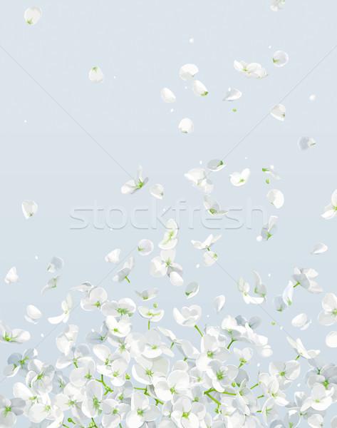 Summer wind vector drawing Stock photo © LisaShu