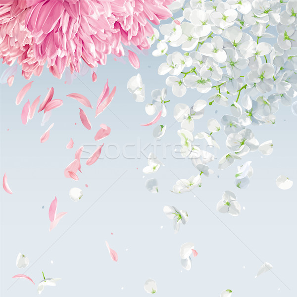 Flying petals vector background Stock photo © LisaShu