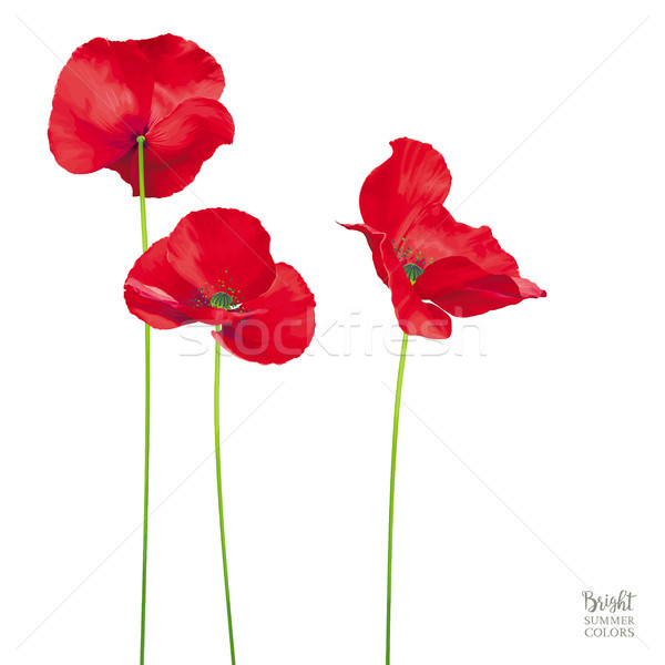 Luxurious bright red vector Poppy flowers isolated on white back Stock photo © LisaShu