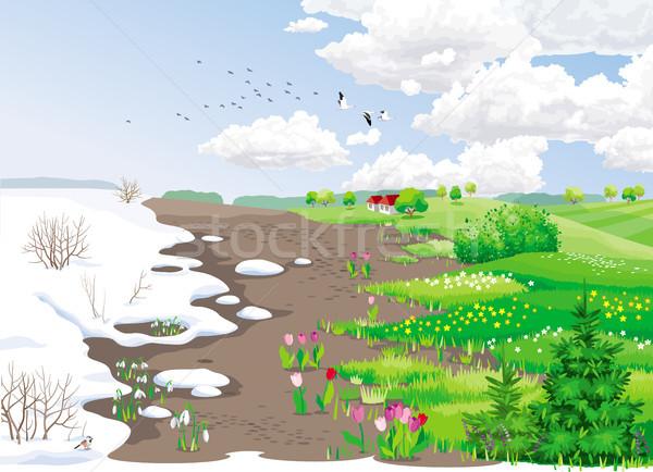 Voorjaar sneeuw tulpen gras Stockfoto © LisaShu