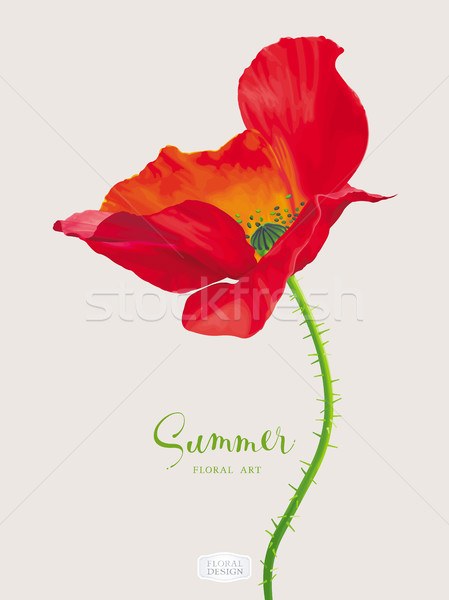 Luxurious bright red vector Poppy flower Stock photo © LisaShu