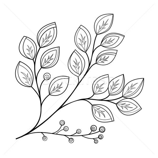 Photo stock: Vecteur · belle · monochrome · contour · feuille · floral