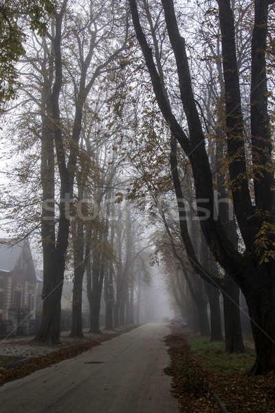 Foggy morning Stock photo © LIstvan