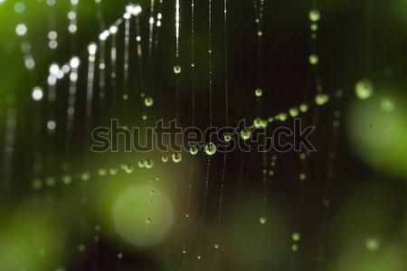drops Stock photo © LIstvan