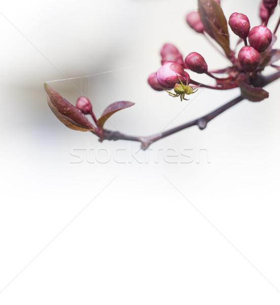 Primavera minuscolo spider fresche rosa Foto d'archivio © lithian