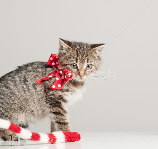 Tiny furball cutie. Stock photo © lithian